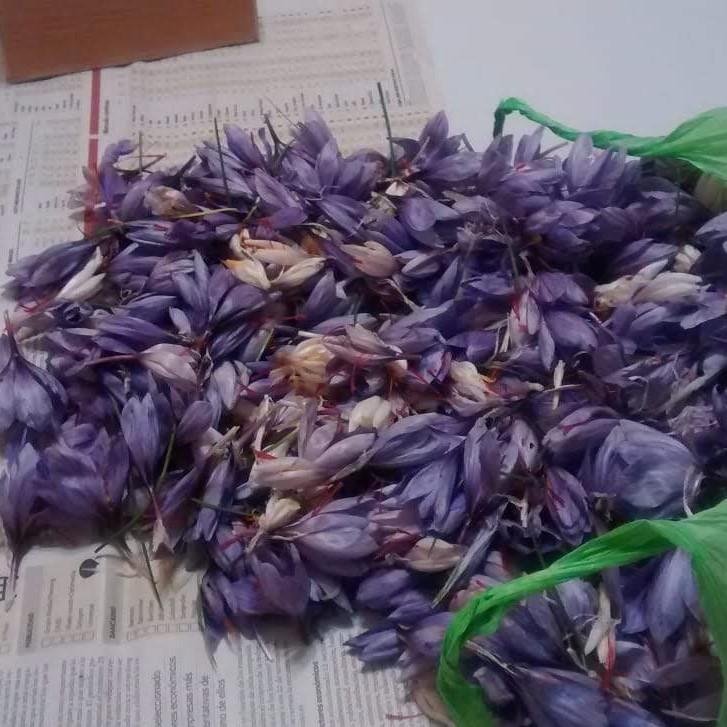 Agroturismo Azafrán