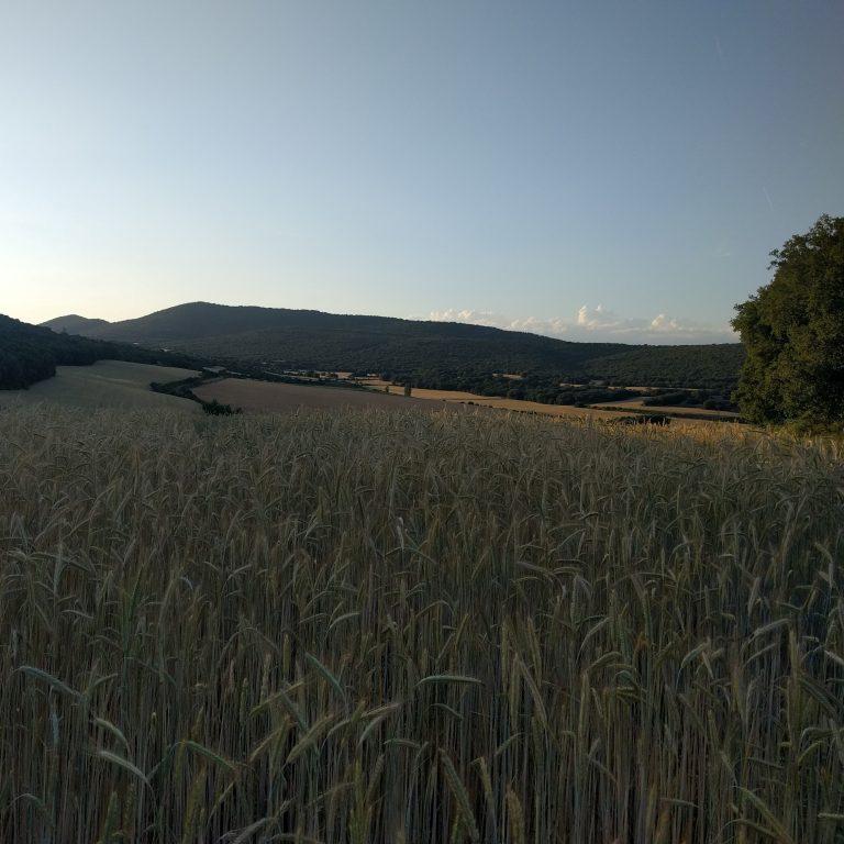 Agroturismo Campos de Trigo