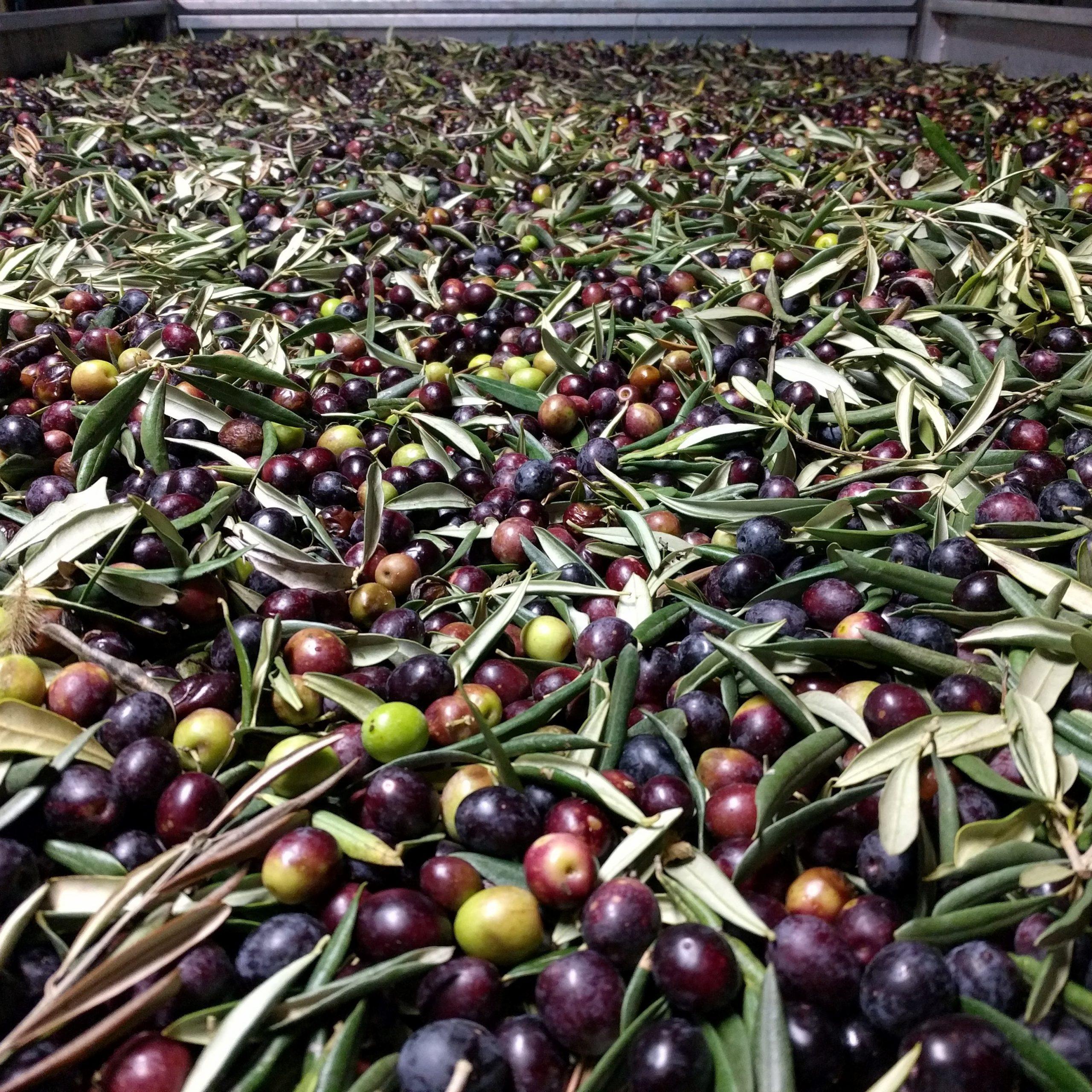 Agroturismo Oliviturismo